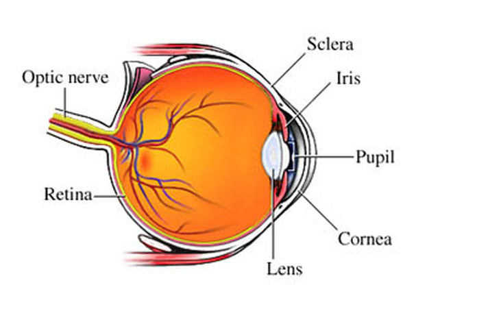 Glaucoma Information On Eye Conditions